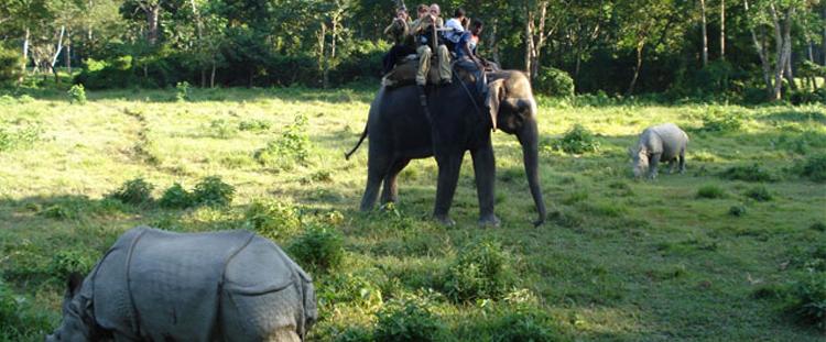 jungle-safari